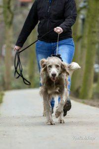 Suchhund Mantrailing